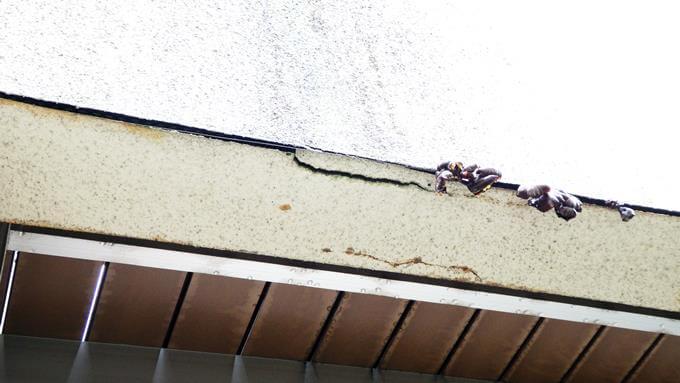 外壁のヒビからキノコが生えている