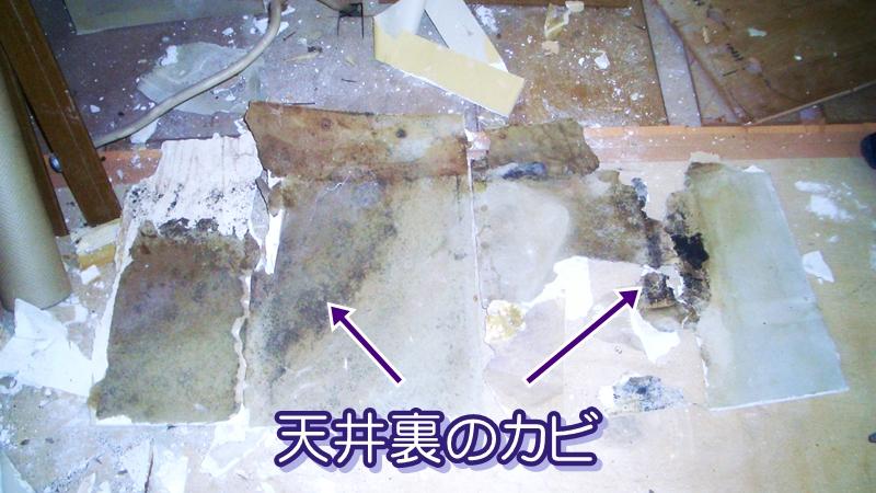 天井裏のカビ