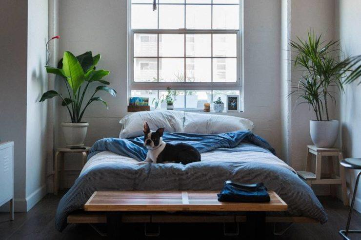 1階の寝室とペット