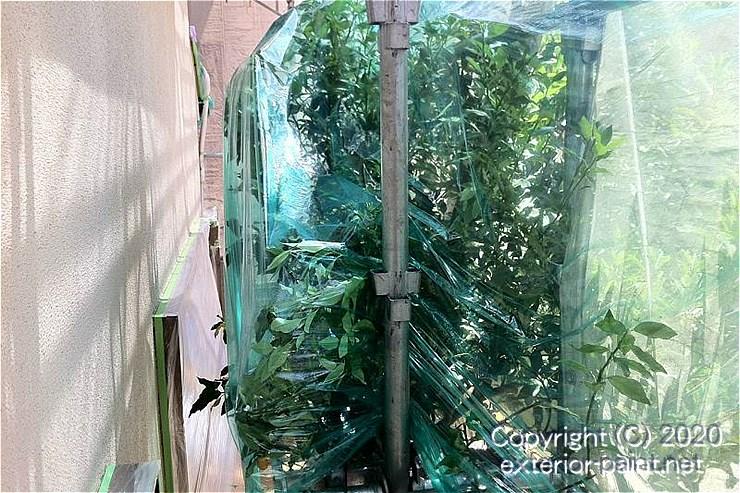 ノンスリップ養生シートで外壁から離すように植木を養生する