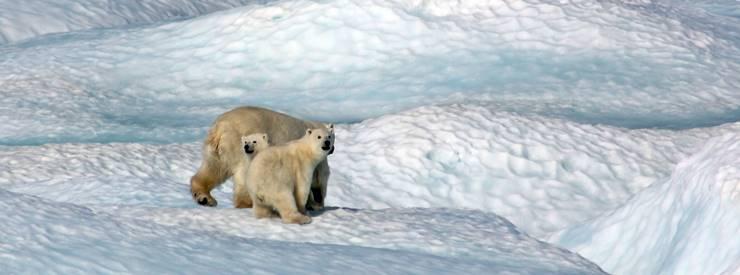 地球温暖化とシロクマ
